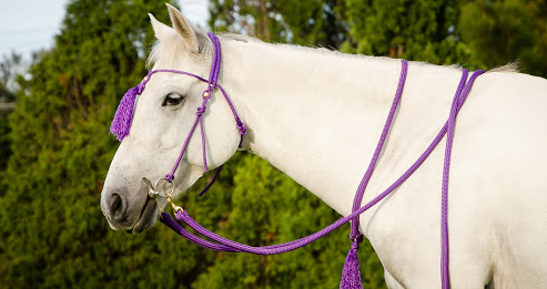 Buy customized bridles for your horse